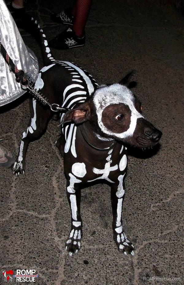 pet paint, dog paint, halloween costume, pet safe paint, pet paints, skeleton, bones