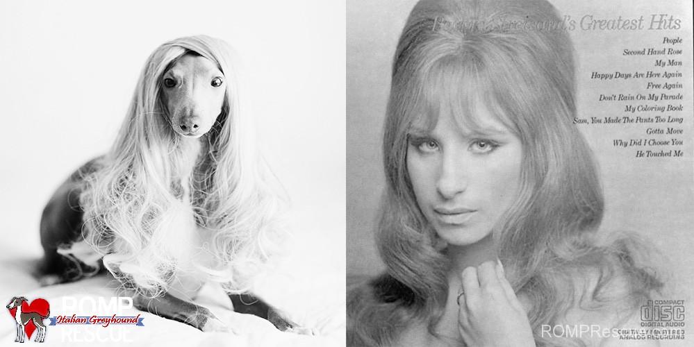 barbara streisand, italian greyhound, lookalike, funny, similar, celebrity, singer