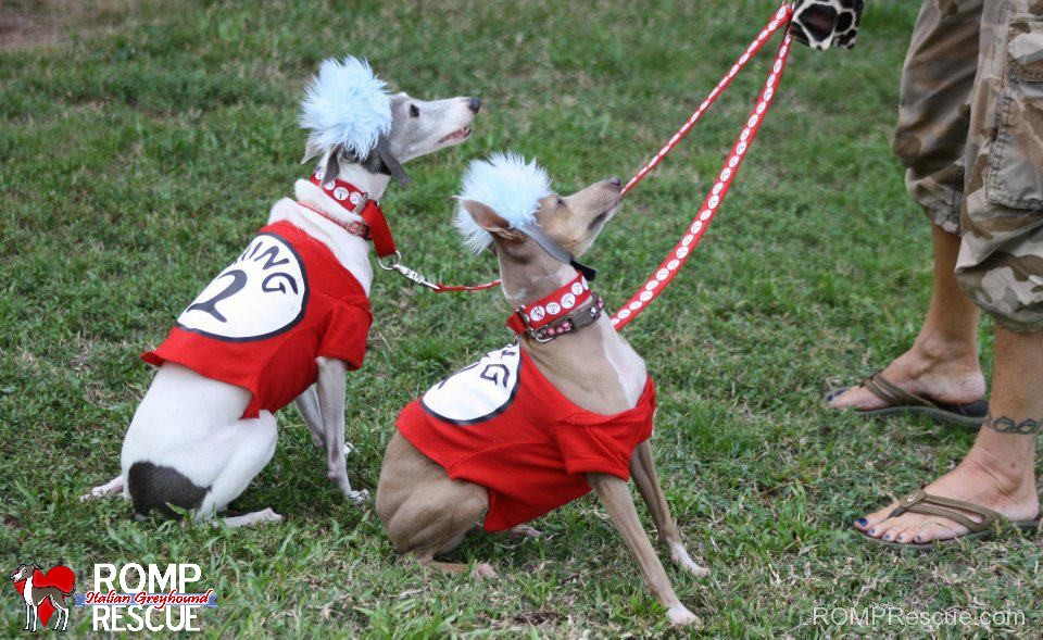 Italian Greyhound Halloween Costumes