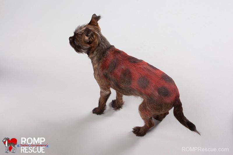 pet paint, dog paint, halloween costume, pet safe paint, pet paints