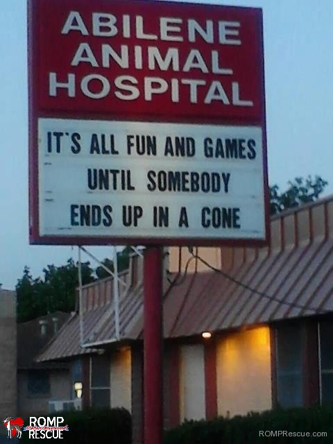veterinarian, funny veterinarian sign, funny vet sign, funny, vet, sign, vet, marquee, fun and games until someone ends up in a cone