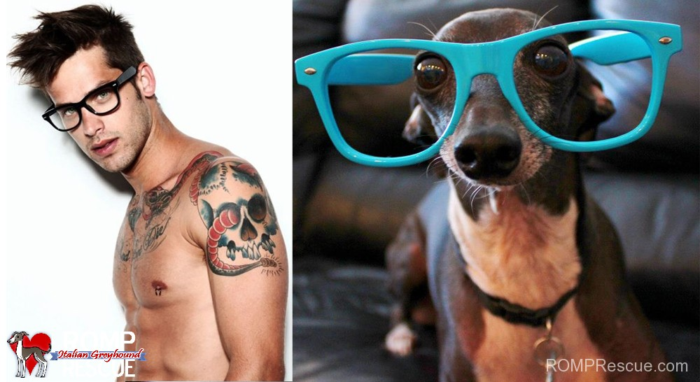 Sexy men IGs 8, dogs do it better, sexy, italian greyhound, dog, canine, funny, cute, sexy, worlds sexiest men, hot, men, man, worlds, alive, cute, hunky, shirt off, glasses, hipster