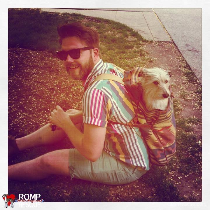 MISSING PIPPIN, italian greyhound, schnauzer, dog, found, lost, chicago, humboldt park, reward, lost, lost dog, missing dog, found dog, terrier mix, terrier, italian greyhound mix, medium, small, wired hair, wirey hair, wire, hair, furry, female