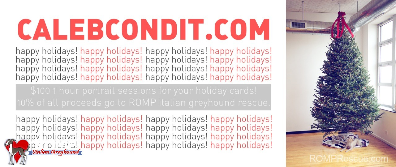 holiday pet photo, pet holiday photo, pet holiday photos, pet holiday photography, chicago, dog, dogs, portrait, session, christmas, cards, illinois, italiang greyhound, sale, deal, discount, caleb condit, caleb, condit, dogs, christmas cards, cards, picture, pictures