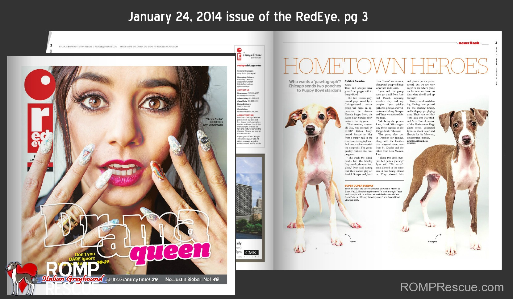 RedEye magazine, chicago, redeye, italian greyhound, article, print, puppy bowl, animal planet, x, 10, sharpie, taser, romp rescue, romp, rescue, italain greyhound, italian greyhounds, 2014, january, february, 24