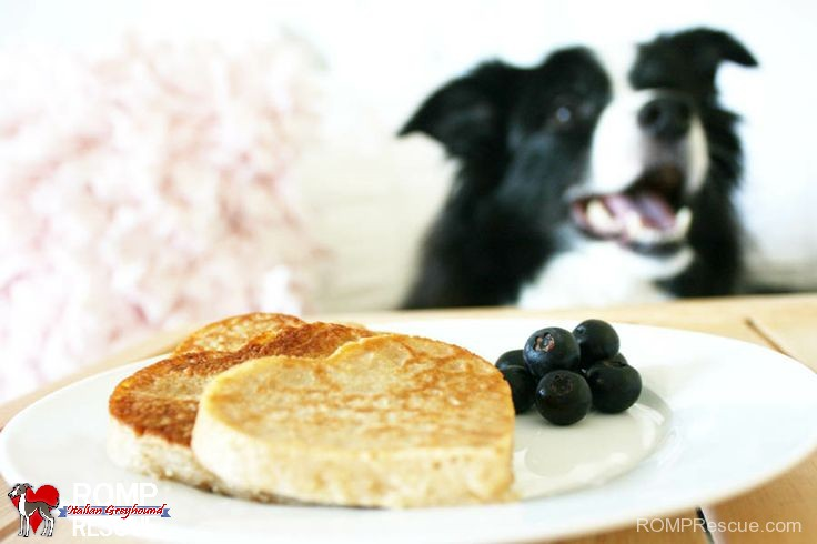 DIY Dog Valentine's Day, diy dog pancakes, dog pancakes, pancakes, pet, valentines day, sweet, friendly, pet, pooch, yummy, recipe, do it yourself, handmade, homemmade, treat, breakfast