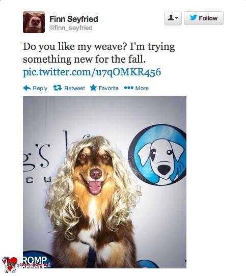 celeb tweets, twitter, tweet, celebrity, celeb, dog, dogs, puppy, puppies, animal, pet, pets, cute, happy, adorable