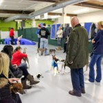 Chicago dog playdate, free, play date, chicago, rescue, dog, dogs, indoor, play date, playdate, meetup, meet up, canine, italian greyhound, iggy, illinois, suburbs, canine crews, small dog